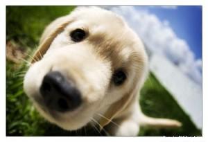 вопросы ветеринару